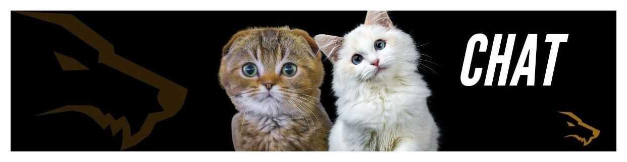Croquette Sans  Céréales Chat : La Meilleure Alimentation du Chat