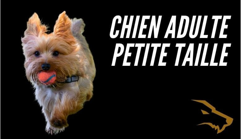 Chien Adulte Petite Taille